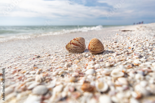 Seashells shelling activity on shell beach in Sanibel, Fort Myers , Southwest Florida coast, USA travel Wallpaper Mural