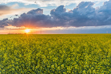 Sunset Over A Canola Field On The Prairies In Saskatchewan, Canada