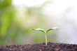 Growing small green sapling plant tree