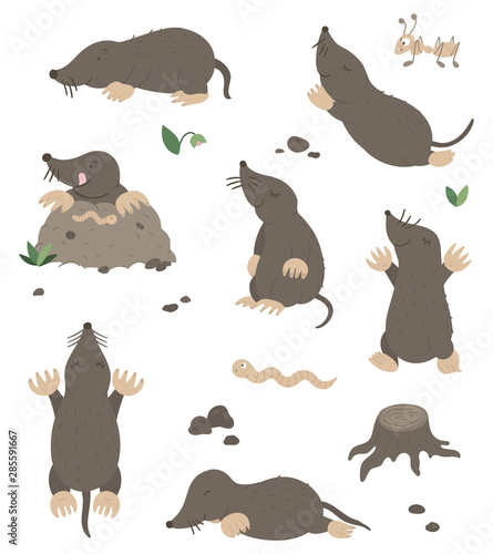 Fotografie, Obraz Vector set of cartoon style flat funny moles in different poses with ant, worm, leaves, stones clip art
