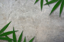 Hemp Or Cannabis Leaves Frame On Concrete Wall Background. Floral Square Frame Made Of Cannabis Leaves On Loft Wall Background. Top View