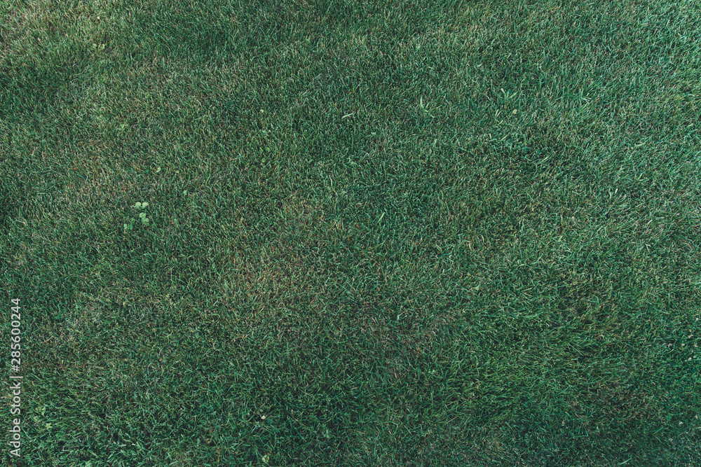 Fototapety, obrazy: Green grass texture background top view