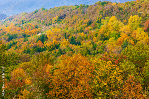 Poster de jardin Parc Naturel The colors of autumn in the Trevigiani hills