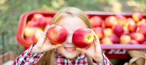 Obraz Girl with Apple in the Apple Orchard. Beautiful Girl Eating Organic Apple in the Orchard. Harvest Concept. Garden, Toddler eating fruits at fall harvest. - fototapety do salonu