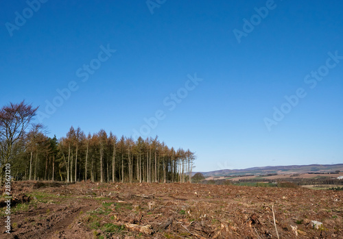 Tree Felling operations above Brechin in the Angus Countryside, where Mixed woodland is being cleared creating disturbed ground Canvas Print