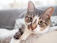 ソファから乗り出し、こちらを見つめる猫