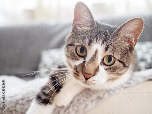 Fotografía ソファから乗り出し、こちらを見つめる猫