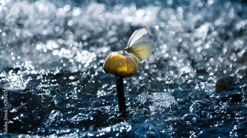 Poster de jardin Nénuphars Tender beautiful butterfly on a yellow water lily on a background of water and rain. Summer artistic image. Free space for text.