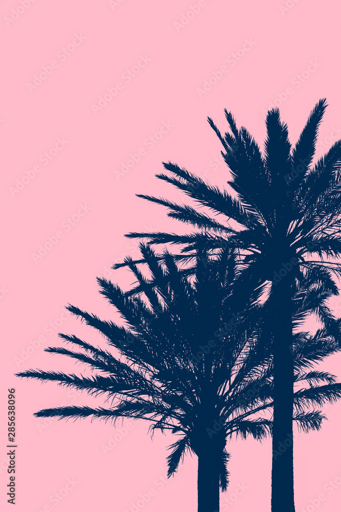 Fototapety, obrazy: Tropical Vacation Background With Silhouetted Palm Trees With Pink Background Copy Space