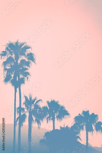 Obrazy Los Angeles  california-zachod-slonca-nad-wzgorzami-z-palmami-na-pierwszym-planie