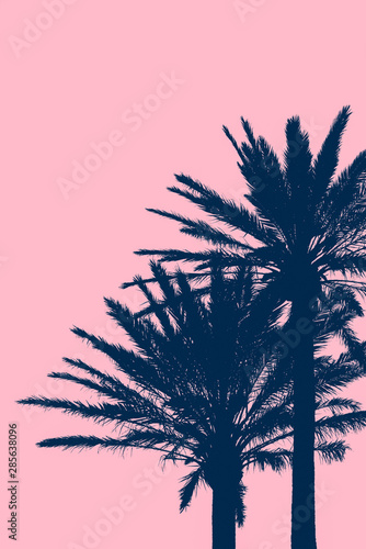 Foto auf Leinwand Rosa hell Tropical Vacation Background With Silhouetted Palm Trees With Pink Background Copy Space
