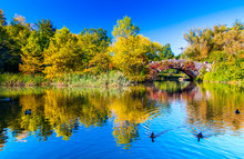Fall In Central Park With Gaps...
