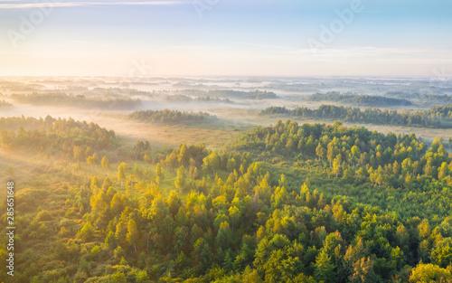 Montage in der Fensternische Honig Foggy sunrise at a swamp
