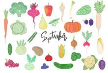 Illustration Set Vegetables