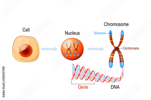 Cell Structure Billede på lærred