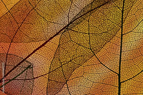 Obraz Abstract orange colored autumn foliage - fototapety do salonu