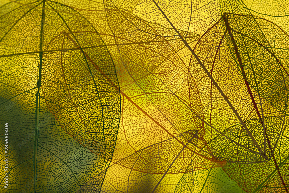 Fototapety, obrazy: Vibrant green autumn leaves
