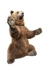 Bear Stands On Its Hind Legs O...