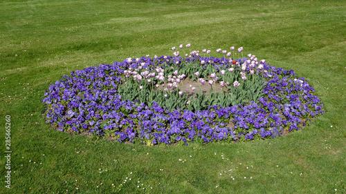 Obraz Parterre de fleurs - fototapety do salonu