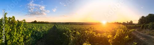 fototapeta na ścianę Couché de soleil dans les vigne en Anjou