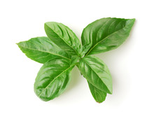 Top View Of Fresh Basil Leaves