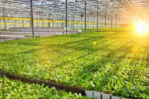 Photographie Herbs growing in greenhouse