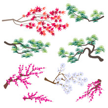 Japanese Maple,  Korean Pine And Blooming Tree Branches