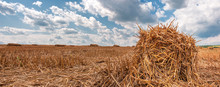 Panorama Of A Large Field On Which Bales Of Straw Lie