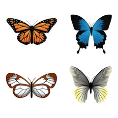 Abtract cute butterfly