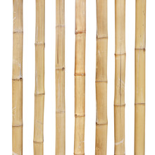 Bamboo Stalks On A White Background With Clipping Path