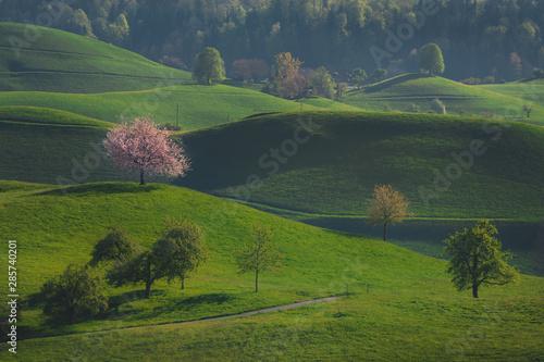 drzewa-w-krajobrazie-hirzel-szwajcaria