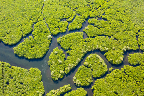 Pinturas sobre lienzo  Tropical forest with mangrove trees, the view from the top