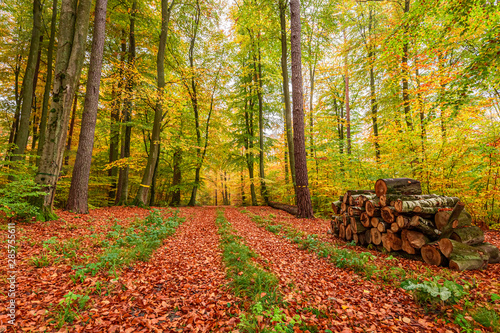 Foto op Canvas Baksteen Brown and green path in the autumn forest in Poland