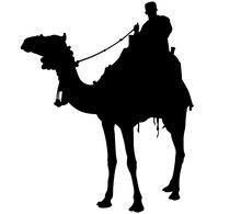 Silhouette Of A Camel Rider Ve...