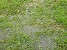 Wet Green Grass Lawn With Water Texture