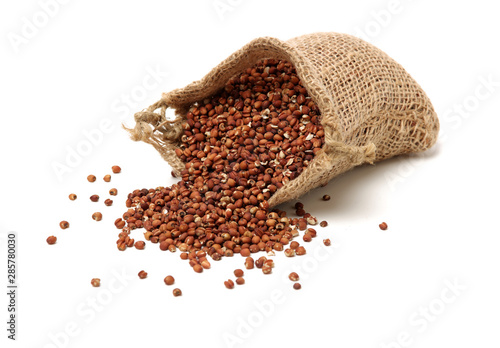 Fotografie, Obraz  Job's tears coix lachryma jobi grain seeds on white background