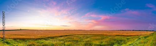 Cuadros en Lienzo  Sunrise over grain fields ripe for the harvest