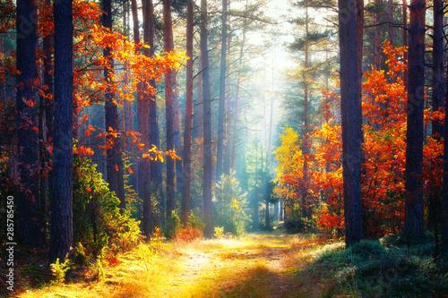Fototapeten Wald Autumn. Fall forest landscape