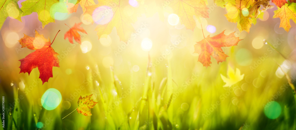 Fototapeta Autumn background with maple leaves over fall nature bokeh
