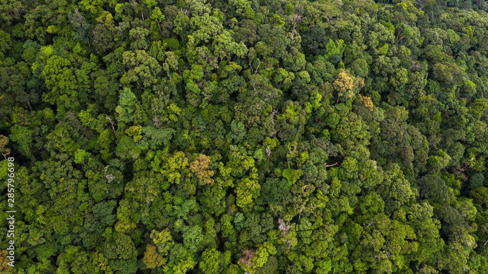 Fototapeta Aerial view asian tropical rainforest, forest tree texture and background.
