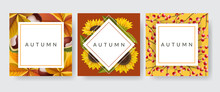 Square Card Frame Set With Autumn Plants, Chestnut And Leaf, Sunflower And Red Berry. Vector Illustration Frame Collection For Autumn, Design Template For Thanksgiving, Or Other Fall Background