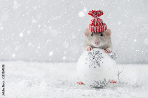 Rat in winter hat holding glass ball decoration Wallpaper Mural