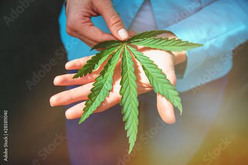 Photo  Green leaf of marijuana in a hand. Conceptual photo