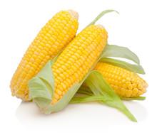 Corn On Cob Kernels Isolated O...