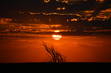Close Up Of The Sunrise Over An Elk City Field, Silhouetting The Stark Bushes And Landscape And Making The Clouds Fiery