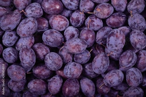 plum prunes fresh lying on the table