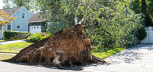 Tree Falls On House During Storm