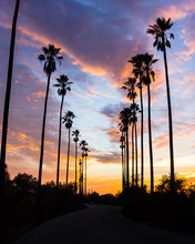 Palm Trees Line Street In Los Angeles - Silhouetted Against Colorful Clouds - 3