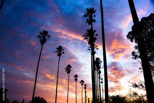 Cadres-photo bureau Palmier Palm Trees Line Street in Los Angeles - Silhouetted Against Colorful Clouds - 1