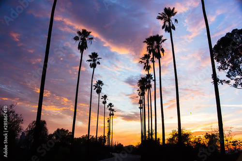 Poster Palmier Palm Trees Line Street in Los Angeles - Silhouetted Against Colorful Clouds - 2